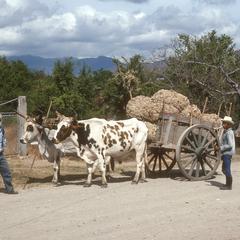 Oxcart, El Progreso, Jutiapa