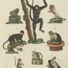New World Monkeys Print