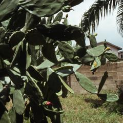 Plants at Agbo Folarin's house in Ibadan