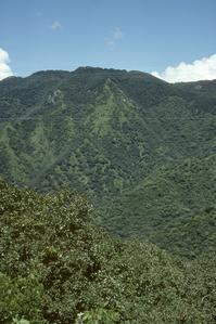 Oak-pine subtropical deciduous forest south of Autlán