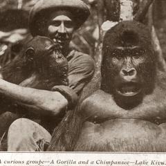 Lake Kivu Gorilla and Chimpanzee Print
