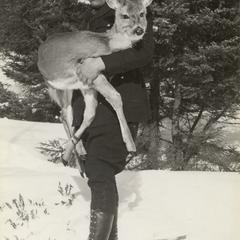 Warden rescuing deer