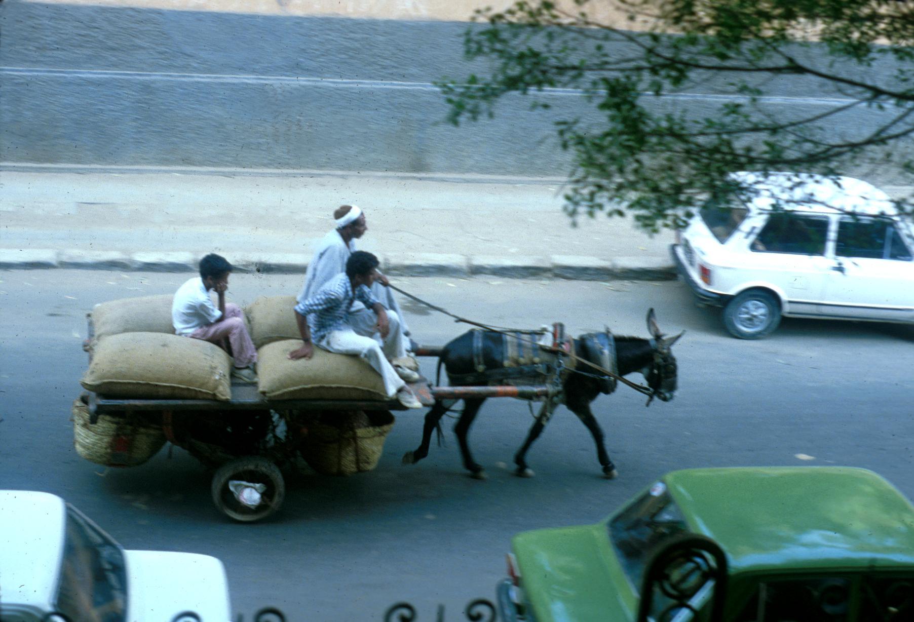 Donkey Pulling Wagon on Cairo Street