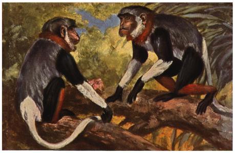 Old World Monkey Print