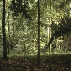 Holdridge Arboretum, La Selva