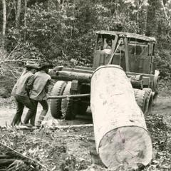 Logging in Attapu Province