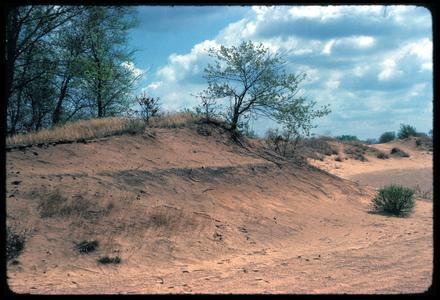 View of dune and blow out, Blue River State Scientific Area