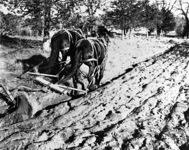 Russell Van Hoosen's horse-drawn plow