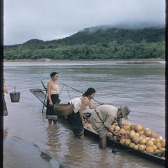 Loading melons at dawn