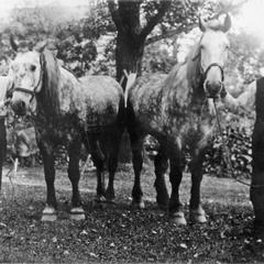 Standard Oil Company, Waukesha, horses