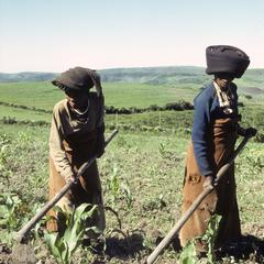 Southern Africa : Agricultural Activities : hoeing