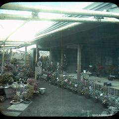 No 127, Flower show house