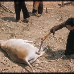 """""""Nyuj Dab"""" (Cow Spirit) ritual, image 08"""