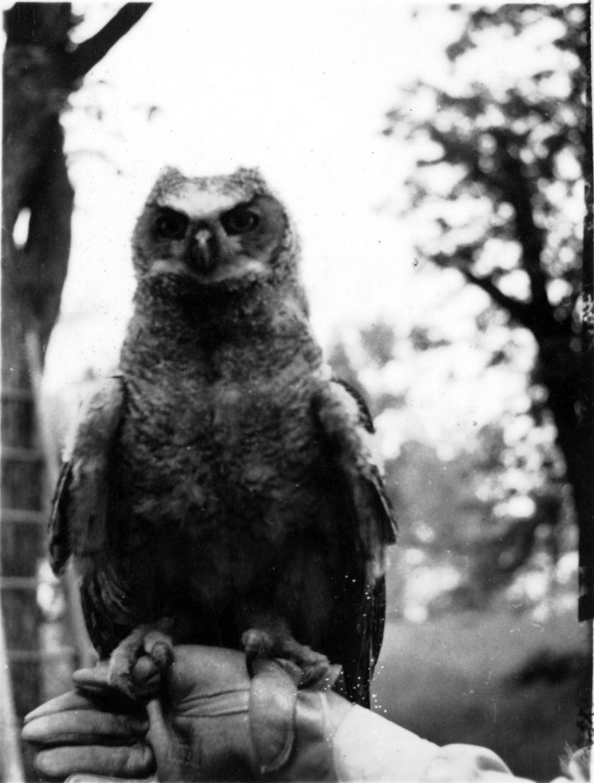 Carl's owl
