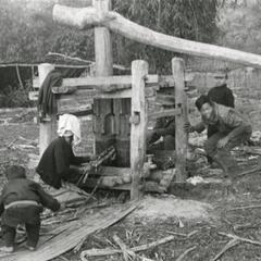 A sugar cane press in use in Houa Khong Province