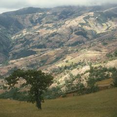 Remnant of pine-oak woodland, Sierra de los Cuchumatanes