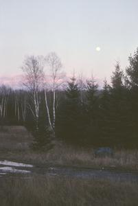 Moon rises over birch and spruce trees, Potawatomi Reservation