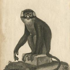 The Blue-Faced Monkey