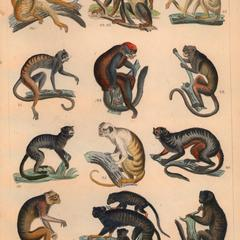 New World Monkeys Print