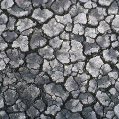 Mud polygons, Lago Cuitzeo