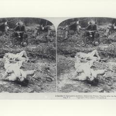 Dead soldiers lie on a battlefield while American soldiers rest nearby, 1899
