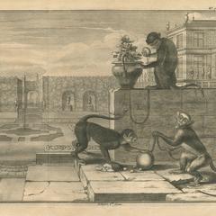 Captive Monkeys Print