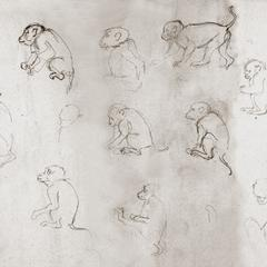 Macaque Sketches
