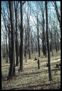 Wingra Woods with Bill Longenecker, University of Wisconsin Arboretum