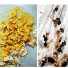 Plasmodial Slime molds - composite, views of plasmodium and sporangia