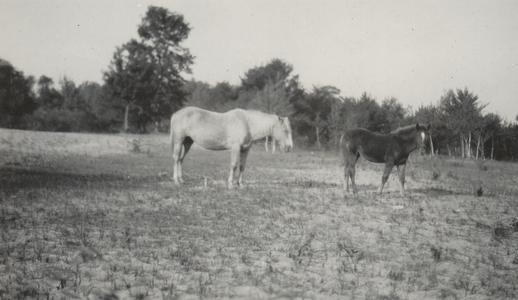 Horses on sand bar at Devil's Lake