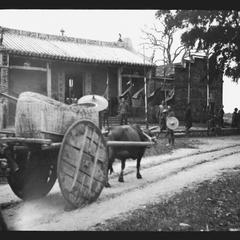 Ox cart with basket for cargo.