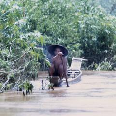 Man paddling boat