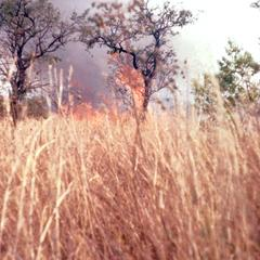 Fire Set to Drive Small Game