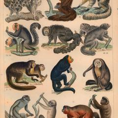 New World Monkey Group Print