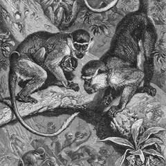 Green Monkey Group Print