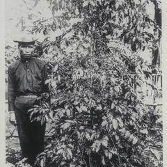 Coffee plant, Bukidnon, 1926-1927