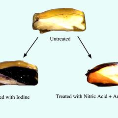 Cut corn grains : untreated; treated with nitric acid; and treated with iodine