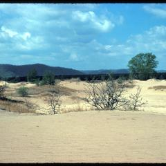Sand blow and dune, Blue River Sand Barrens, State Scientific Area
