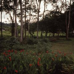 Plants and trees in Ife