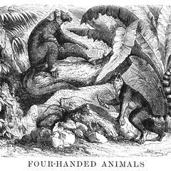 The Lemurs