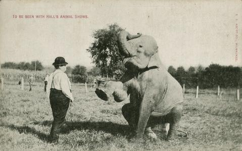 Circus elephant with trainer
