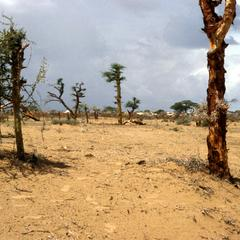 Ground Near Refugee Camp Picked Over for Firewood
