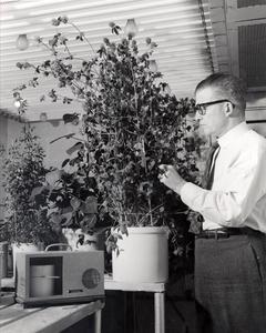 O.N. Allen in greenhouse