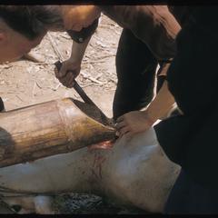 """""""Nyuj Dab"""" (Cow Spirit) ritual, image 11"""