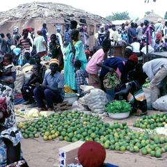 Oranges, Grapefruit, and Limes : Common Fruits in Village Market