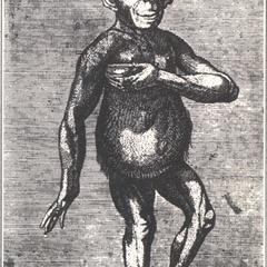 The London Chimpanzee of 1738