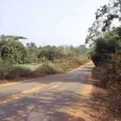 Road to Ipetu surrounded by trees