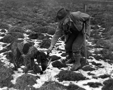 Aldo Leopold hunting with Gus