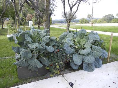 Gardening Club box gardens