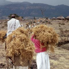 Bringing in Crops of Oromo Spirit Medium (K'allu)